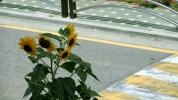 2014.08.15_03_JiSunLEE