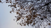 2014.11.30_JiSunLEE