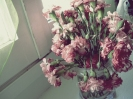 dying flowers (3)
